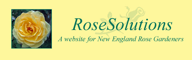 rosesolutions logo